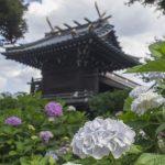 白山神社(東京)|東京都のパワースポット