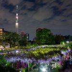 亀戸天神社(東京)|東京都のパワースポット