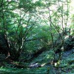 秋葉山|静岡県のパワースポット