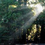 内宮(皇大神宮)|三重県のパワースポット