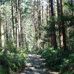 熊野三山|和歌山県のパワースポット