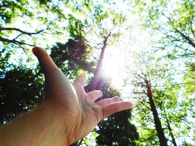 招霊の木でパワーを吸収