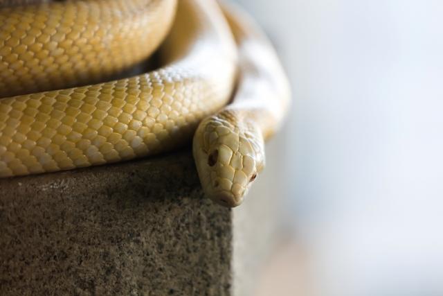 白蛇に縁結び祈願を