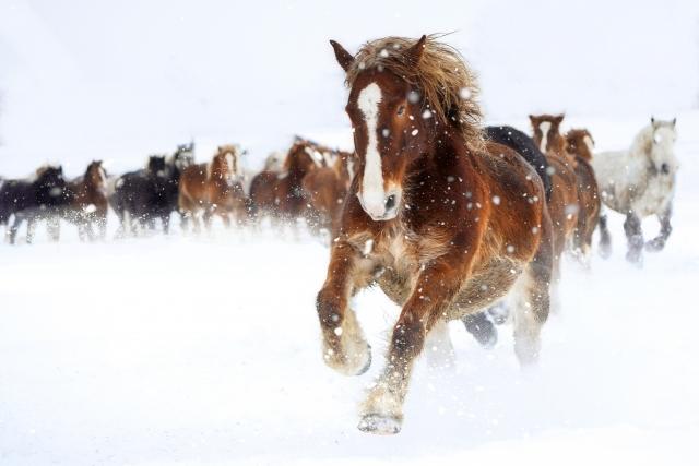 馬頭観音に交通安全祈願