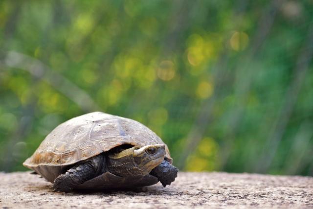長寿の象徴である「福徳亀」を撫でると・・・