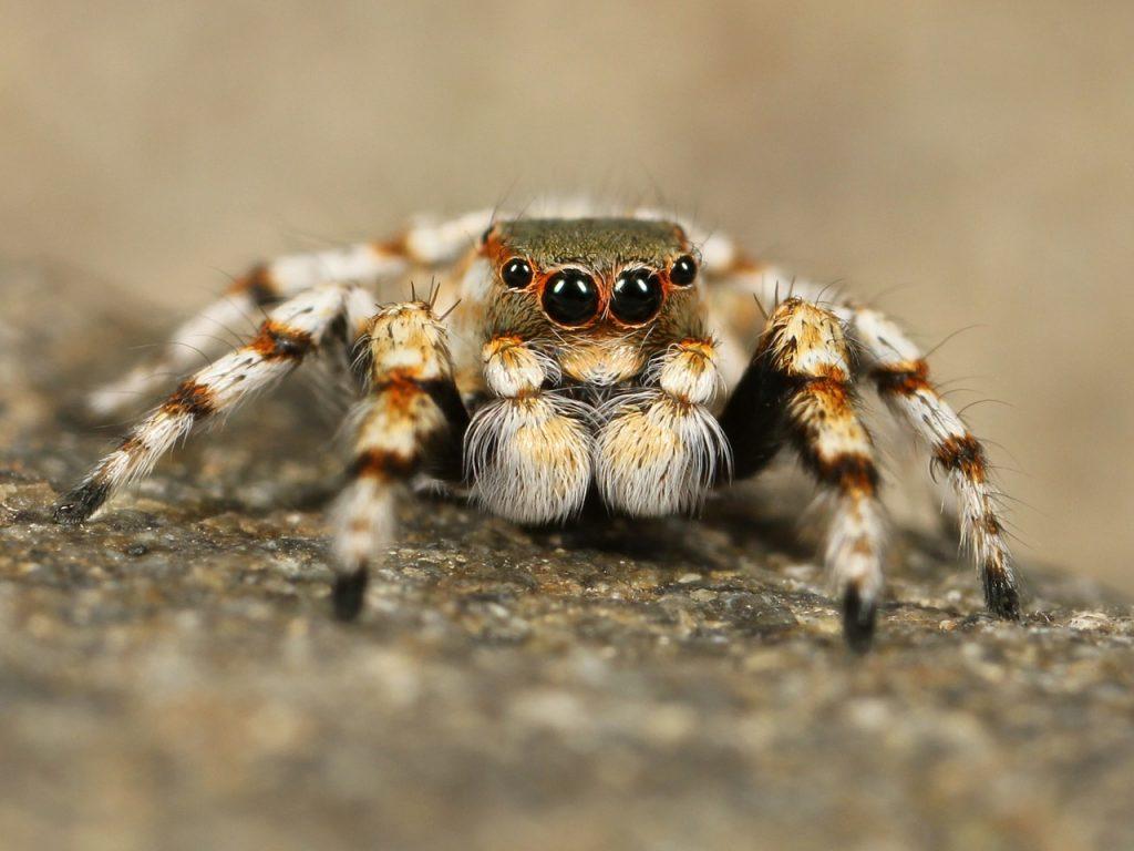 退治した土蜘蛛が埋められている