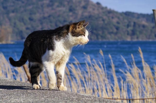 島内の商店の猫ちゃんにお祈りしてもらう