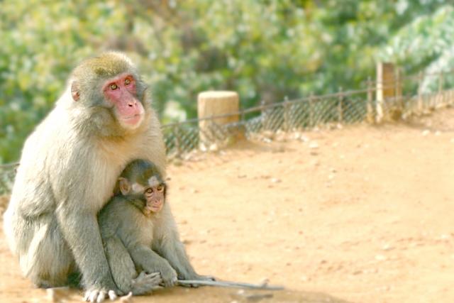 猿が人間になった伝説
