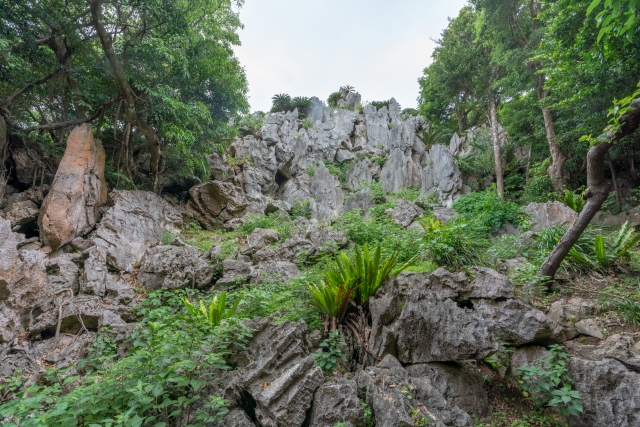 大石林山|沖縄県のパワースポット|パワースポット検索。