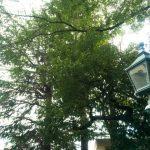 北野天満神社|兵庫県のパワースポット/神社|パワースポット検索/神社検索。
