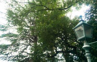 北野天満神社|兵庫県のパワースポット|パワースポット検索。