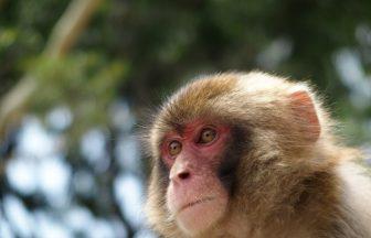 乙宝寺|新潟県のパワースポット/神社|パワースポット検索/神社検索。