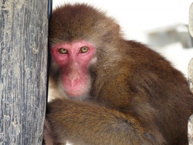中山神社|岡山県のパワースポット/神社|パワースポット検索/神社検索。