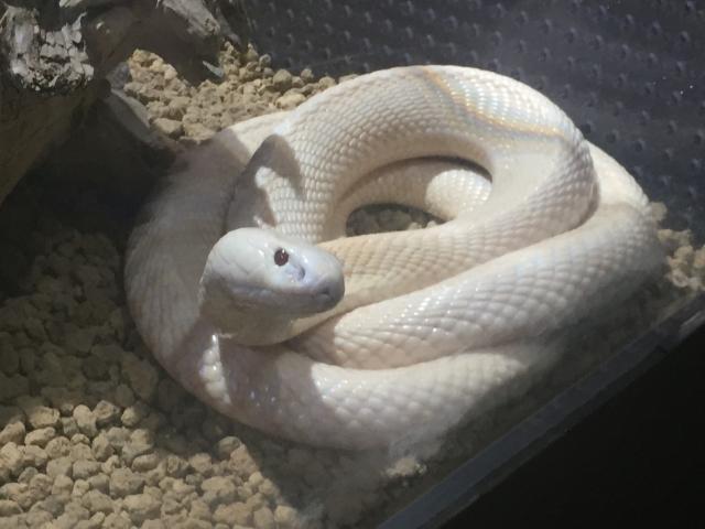 白蛇に見える御神木