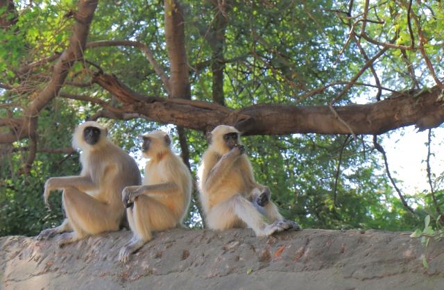見ざる聞かざる言わざるの猿