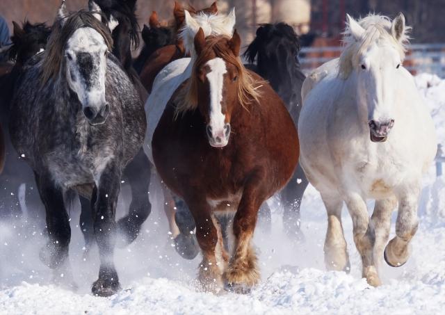 競走馬の聖地