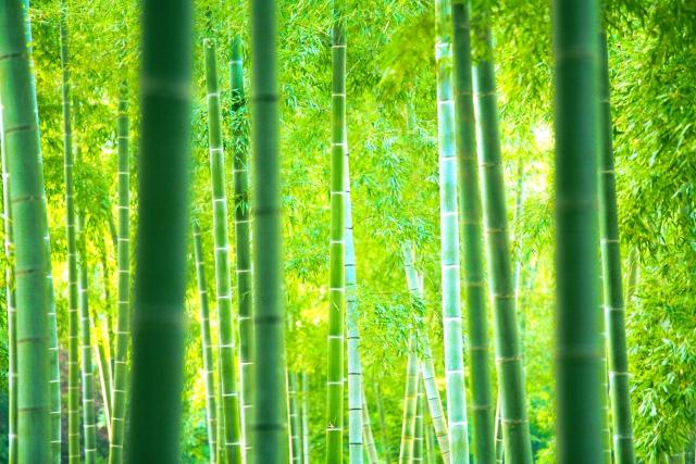 一言主が宿る三岐の竹