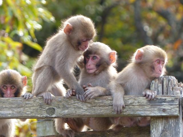 日光と真逆のお元気三猿