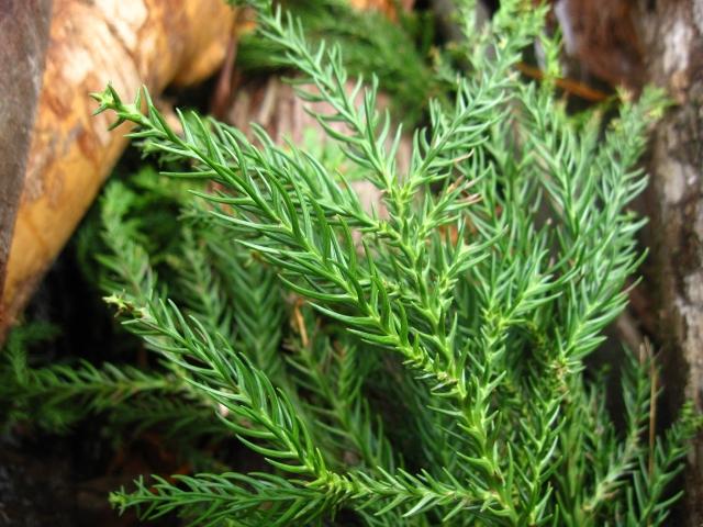 神木「氣の大杉」で自然の力を