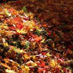 能代鎮守日吉神社|秋田県のパワースポット/神社|パワースポット検索/神社検索。