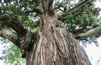 大杉神社|栃木県のパワースポット/神社|パワースポット検索/神社検索。
