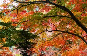 日向大神宮|京都府のパワースポット|パワースポット検索。