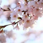 桜松神社|岩手県のパワースポット/神社|パワースポット検索/神社検索。