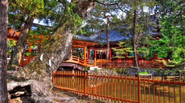 家族幸の木で家内安全を祈る