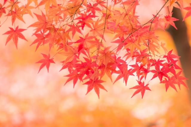 八重の楓の御紋