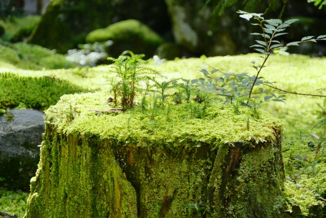 福井の苔寺