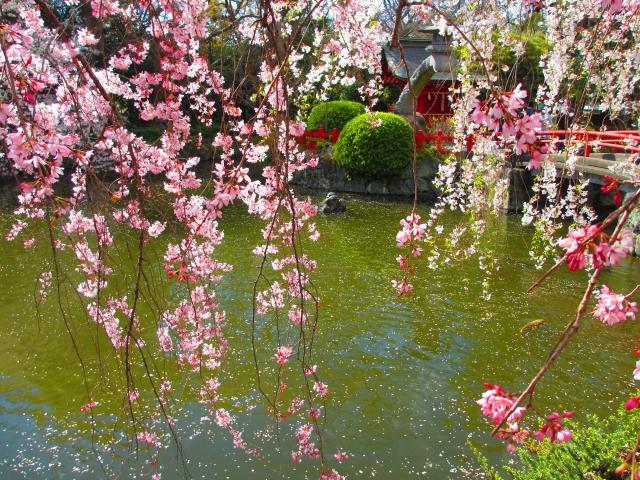 厳島神社で安産、芸能上達祈願
