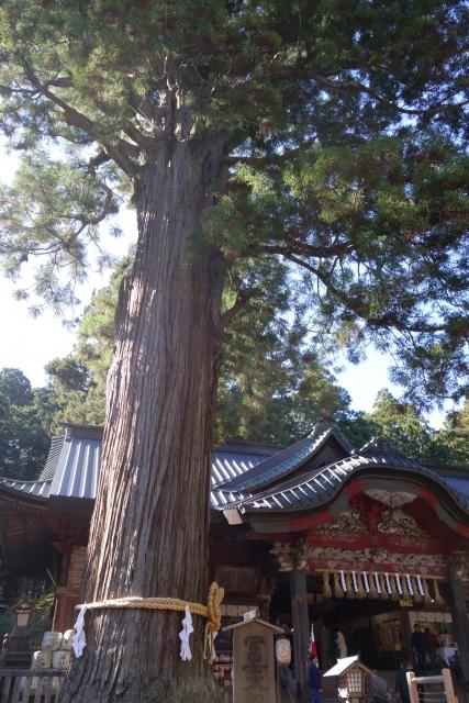 富士太郎杉で巨木のエネルギーを