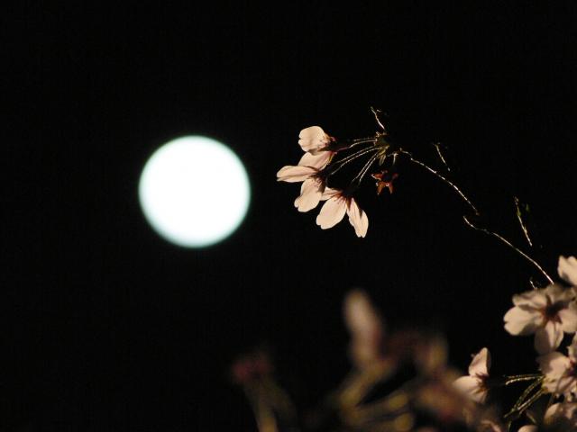 戦国武将が月見をした月見御殿